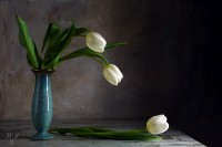 vintage still life, white tulips and a blue porcelain vase on an