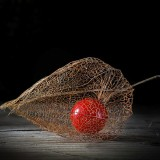 physalis_dark