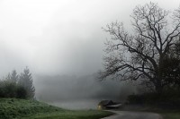 old shabby house under a bare tree in foggy weather, gray rural landscape with copy space